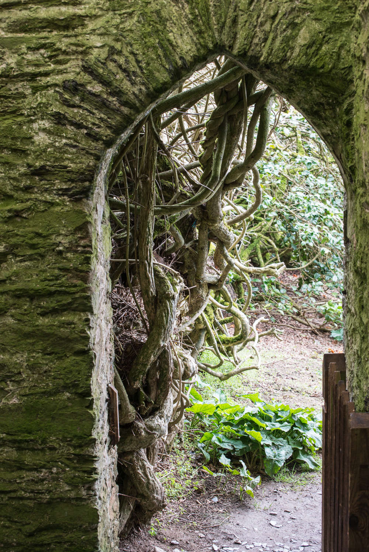 Rhododendrons and Memories of Manderley: A Garden Visit - Gardenista