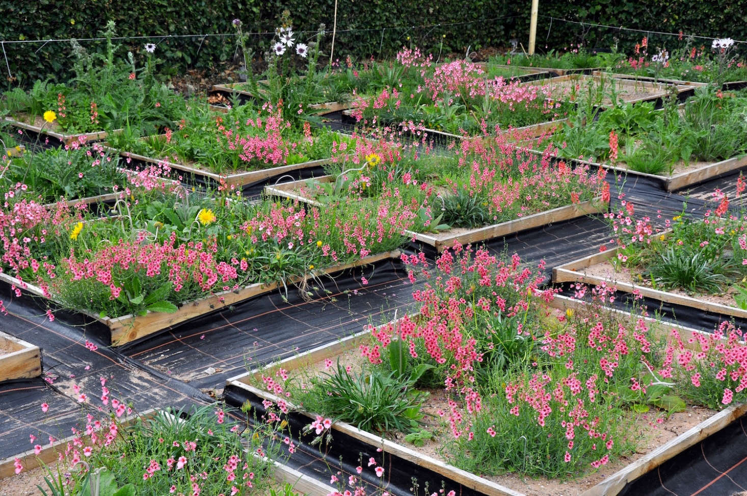 Ask The Expert: How to Plant a Meadow Garden, with James ...