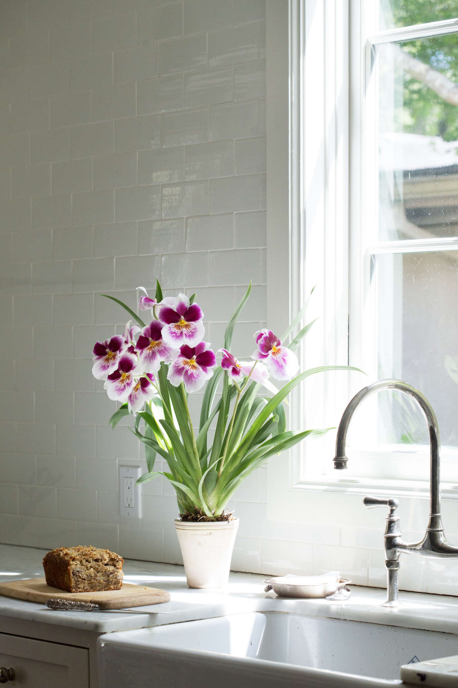 A Miltonia orchid is happy in a clay pot (with proper drainage). Photograph by Mimi Giboin.