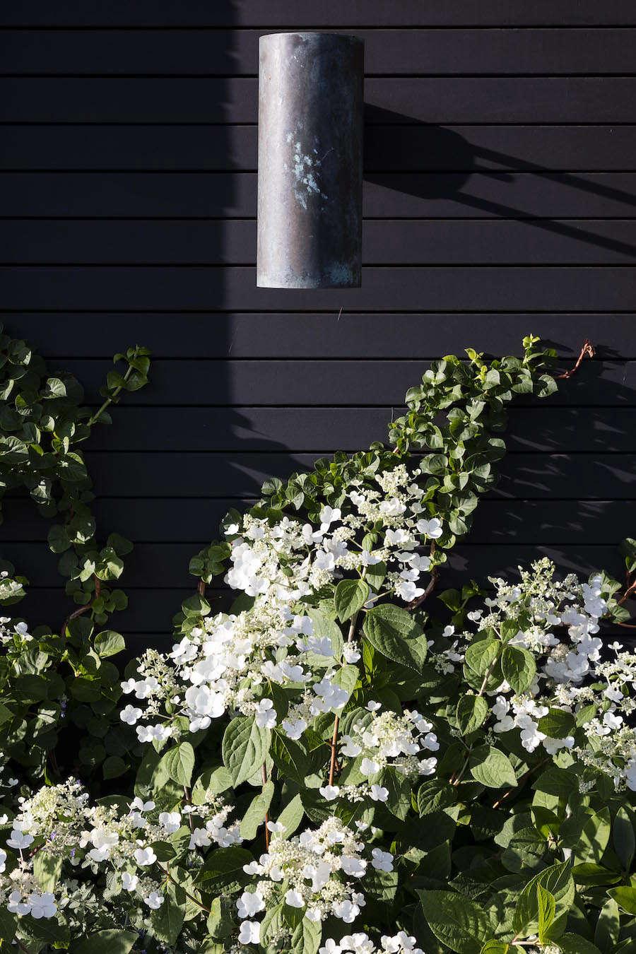 Cold-hardy Hydrangea paniculata &#8