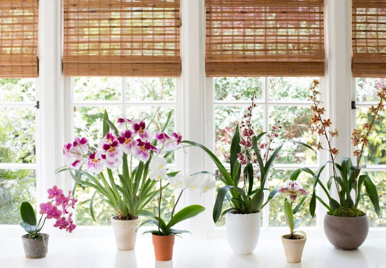 best orchid house plants. I feared orchids for years  assuming they earned their hothouse flower nickname honestly But actually Growing is easy if you follow a few simple Best Indoor Plants 6 Flowering Orchids to Grow Gardenista