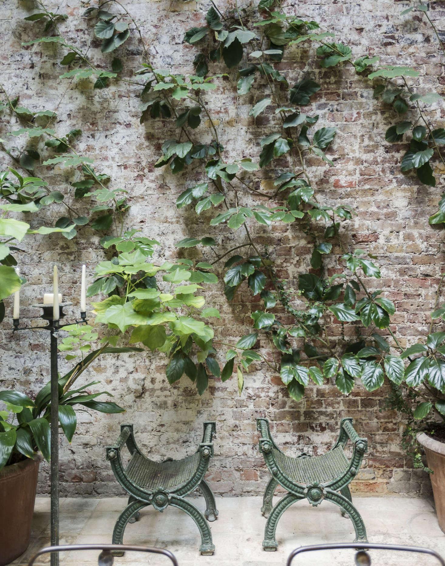 Oak-leaf ivy (Cissus rhombolia) is a vine that prefers low light.