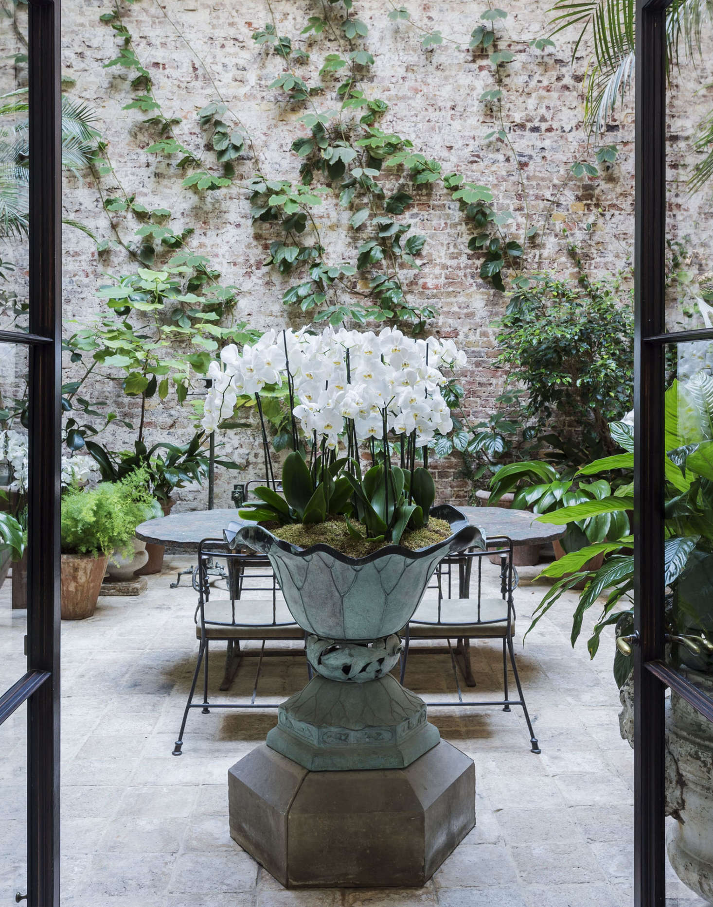 A spectacular moth orchid in designer Rose Uniacke's London conservatory. Photograph by Matthew Williams.