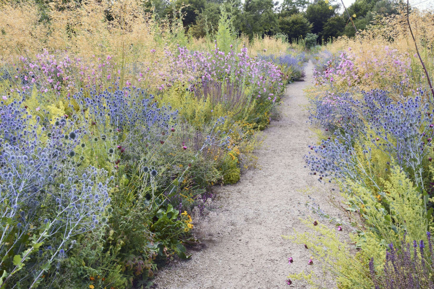 Stipa giganta and wildflowers edge a gravel path in the Merton borders atUniversity of Oxford Botanic Garden.Photograph courtesy ofTimber Press. For more, seeAsk The Expert: How to Plant a Meadow Garden, with James Hitchmough.