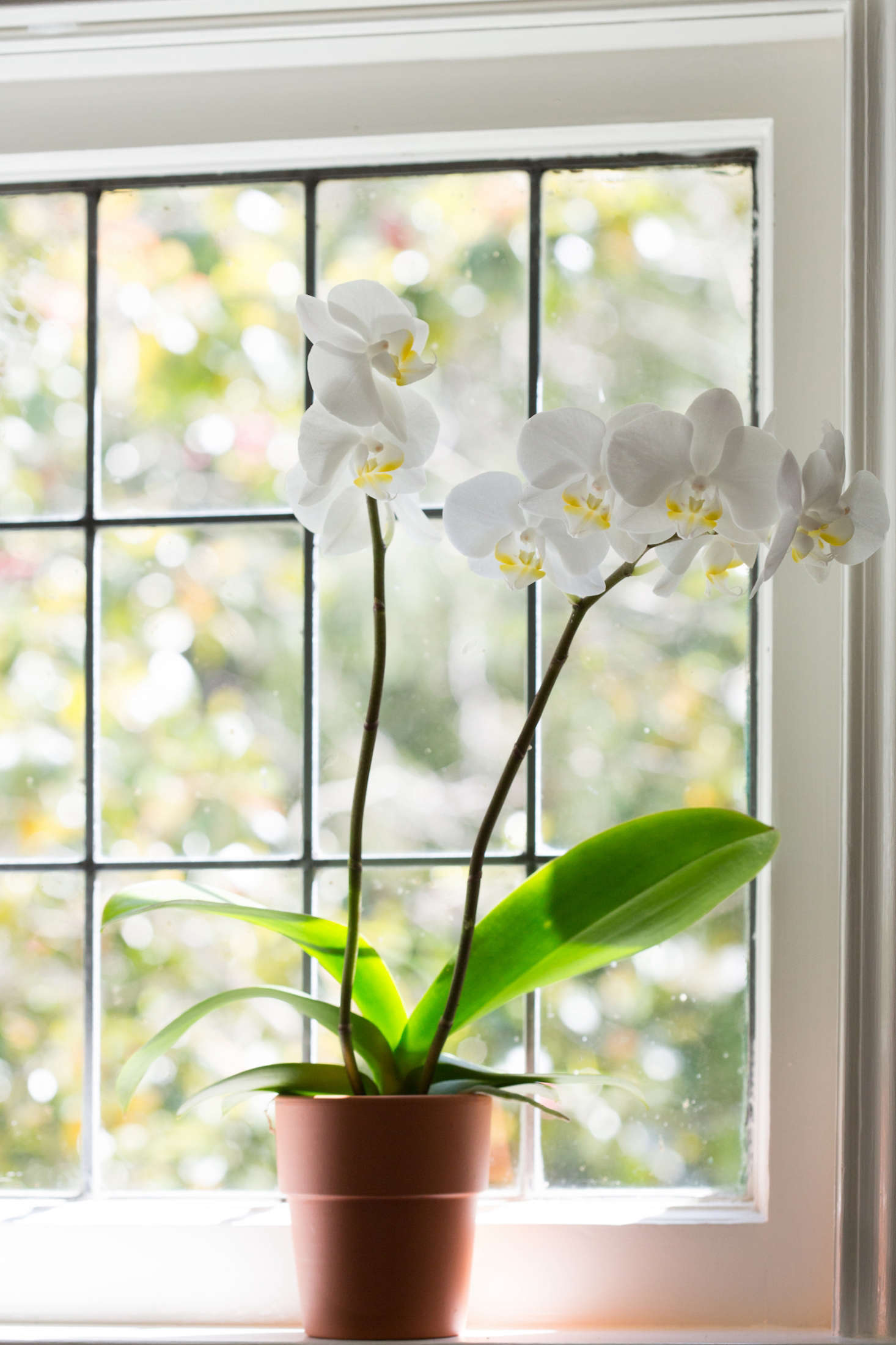 How To Make An Orchid Bloom Again Gardenista