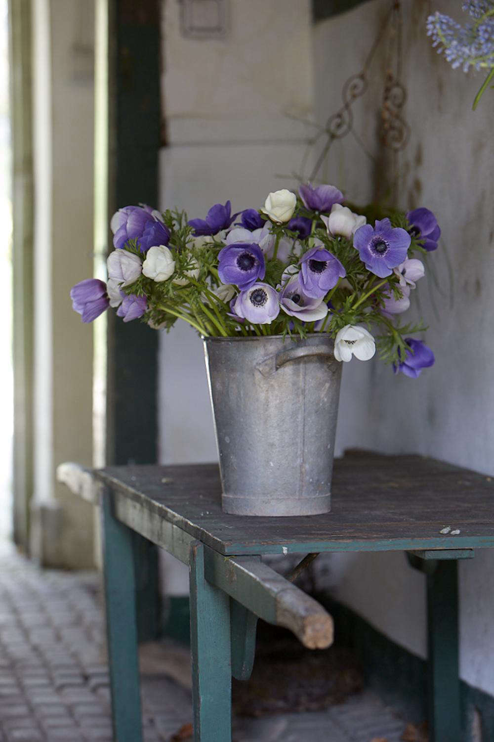 Freshly cut anemones rest in the cool interior of Polly's stables.