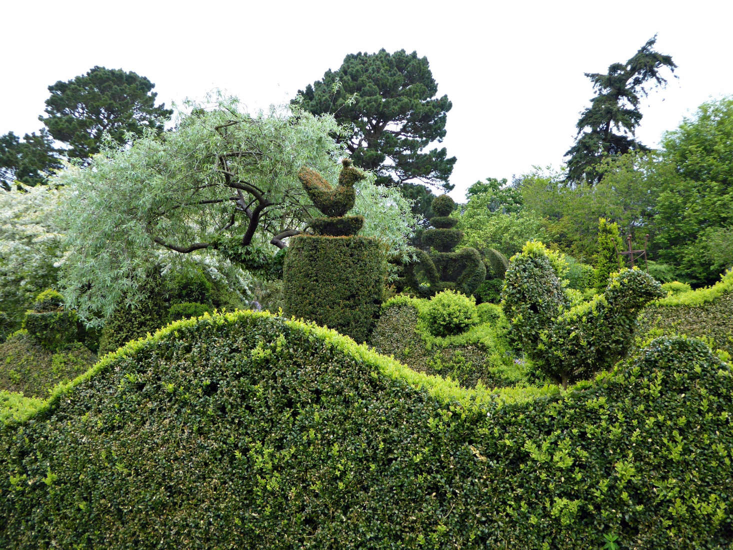 Garden Visit Charlotte Molesworth S Topiary Garden Gardenista
