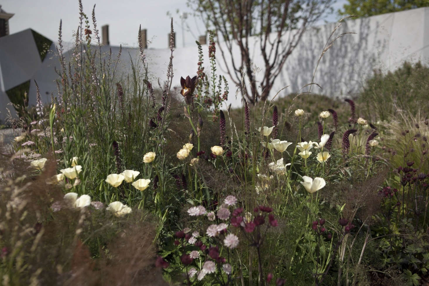 Sneak Peek: Sights and Sounds of the 2017 Chelsea Flower Show (Opens ...
