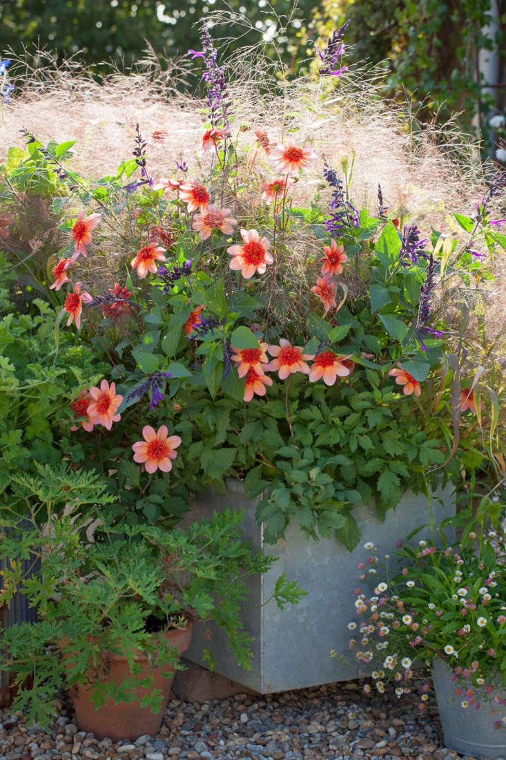 Perennial plants for pots 28 images container ideas for Perennial container garden designs