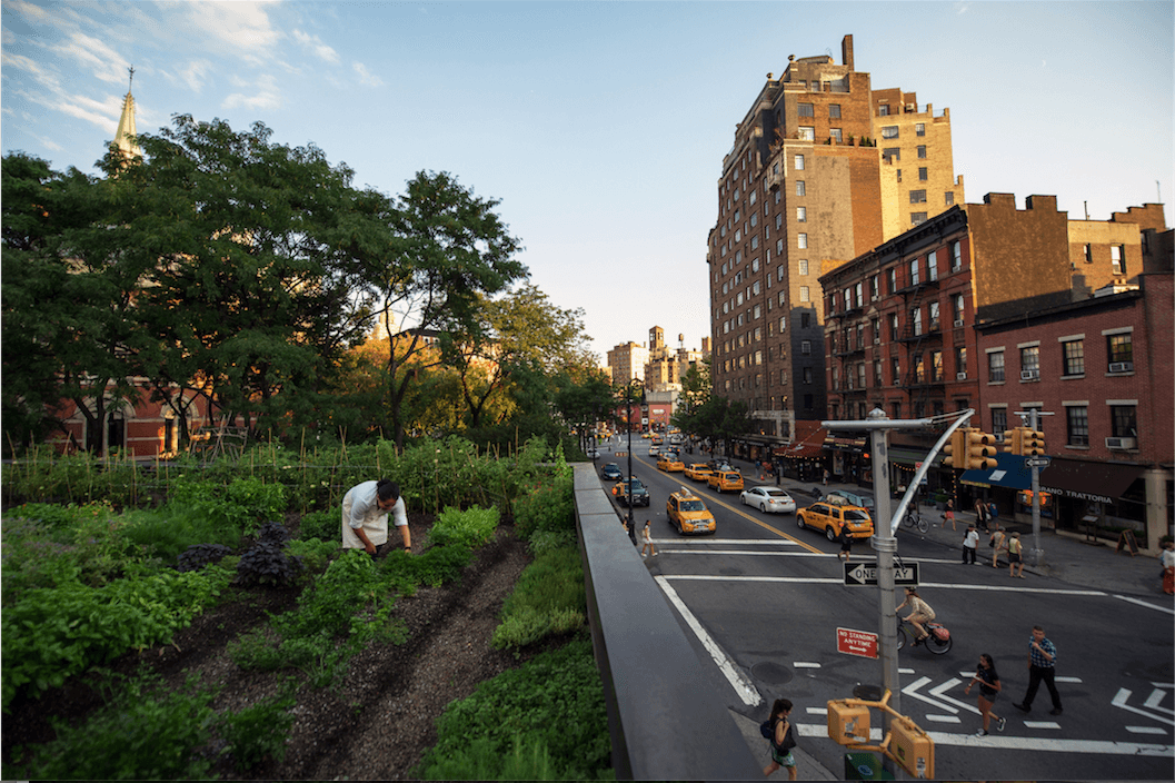 Suarez Drew Inspiration From Brooklyn Grange To Design The  1,000 Square Foot Rooftop Garden