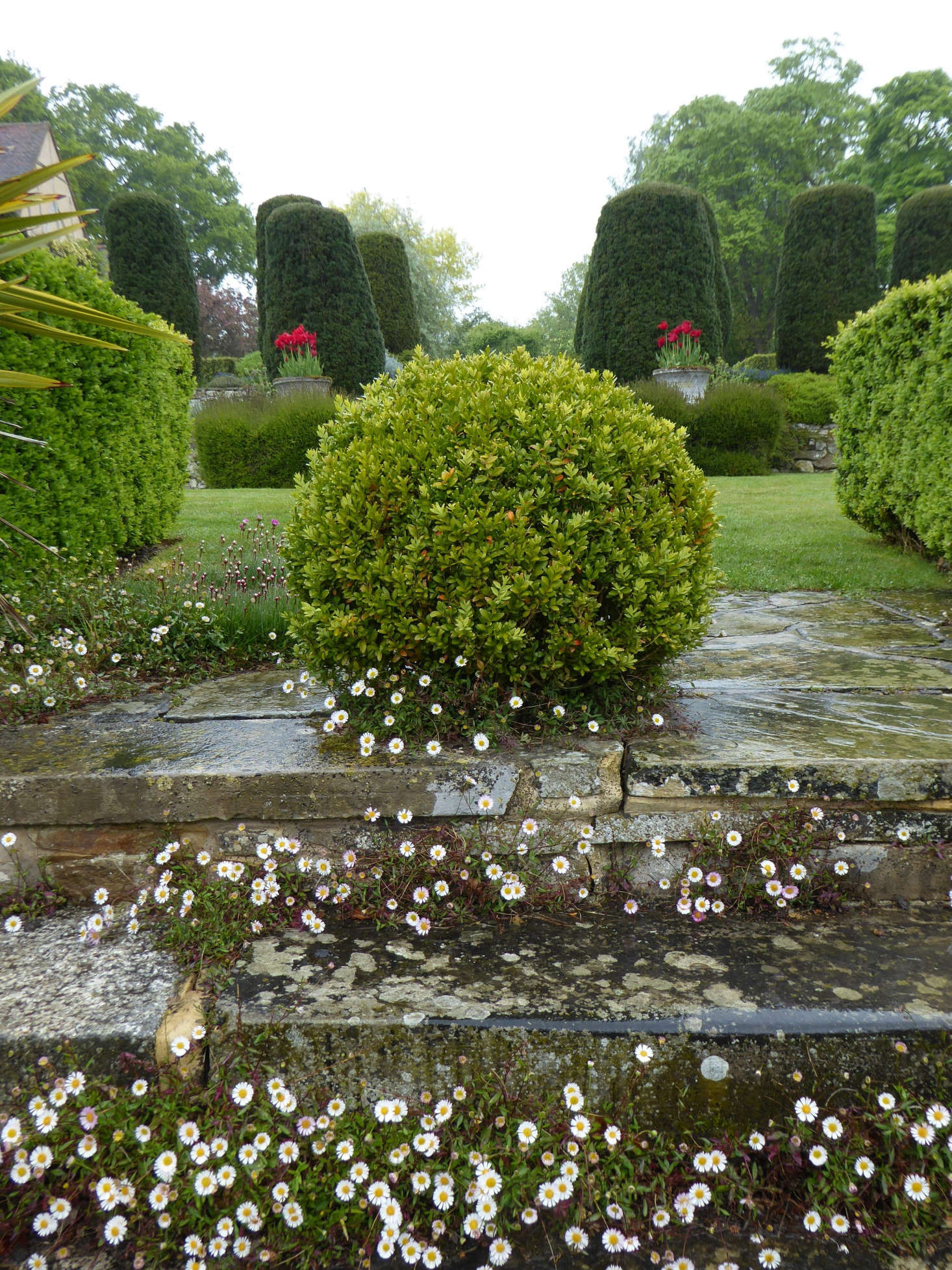 Erigeron karvinskianus is allowed to populate the crevices of stone steps.