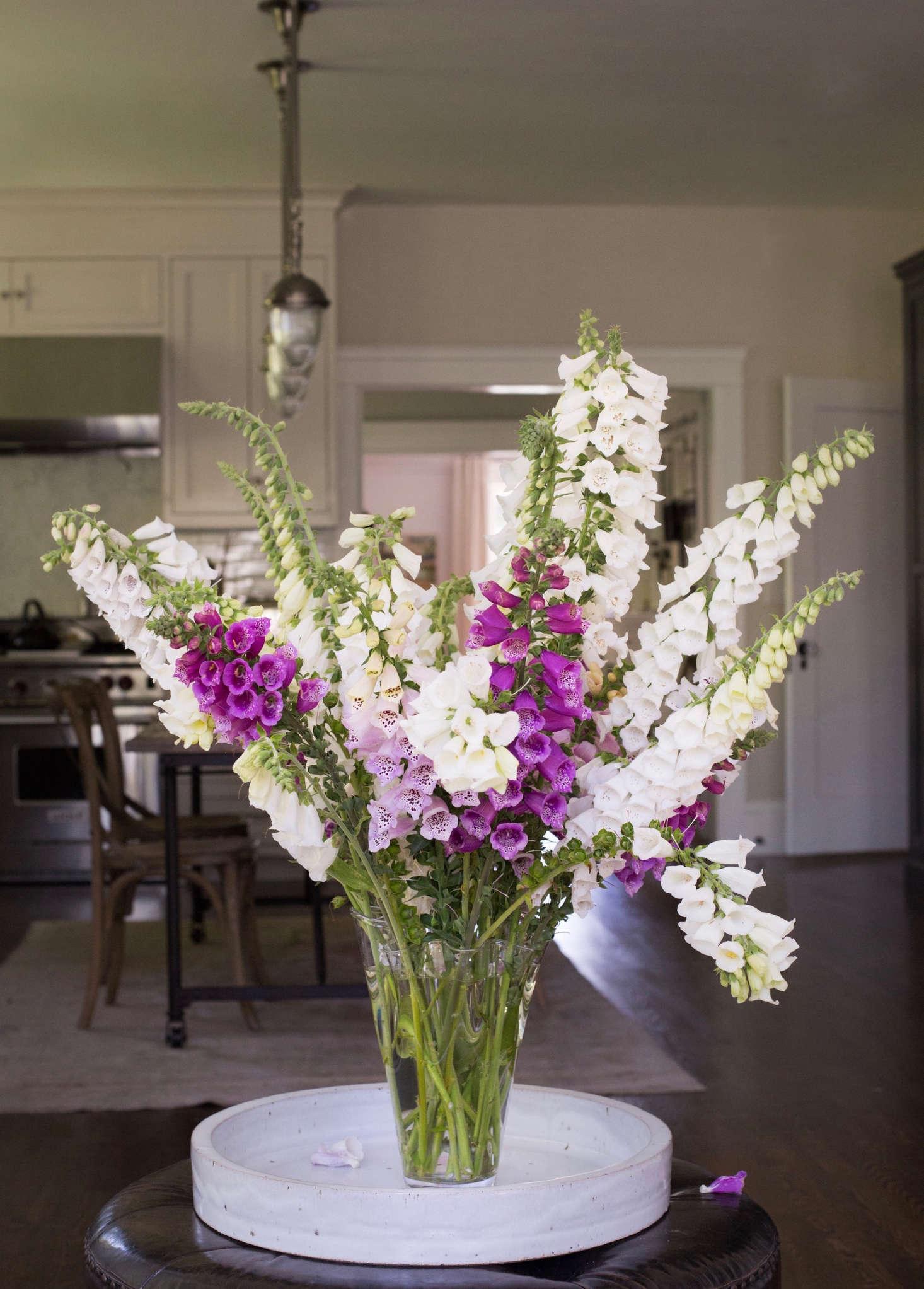 Foxgloves Rethinking A Fickle Flower Gardenista