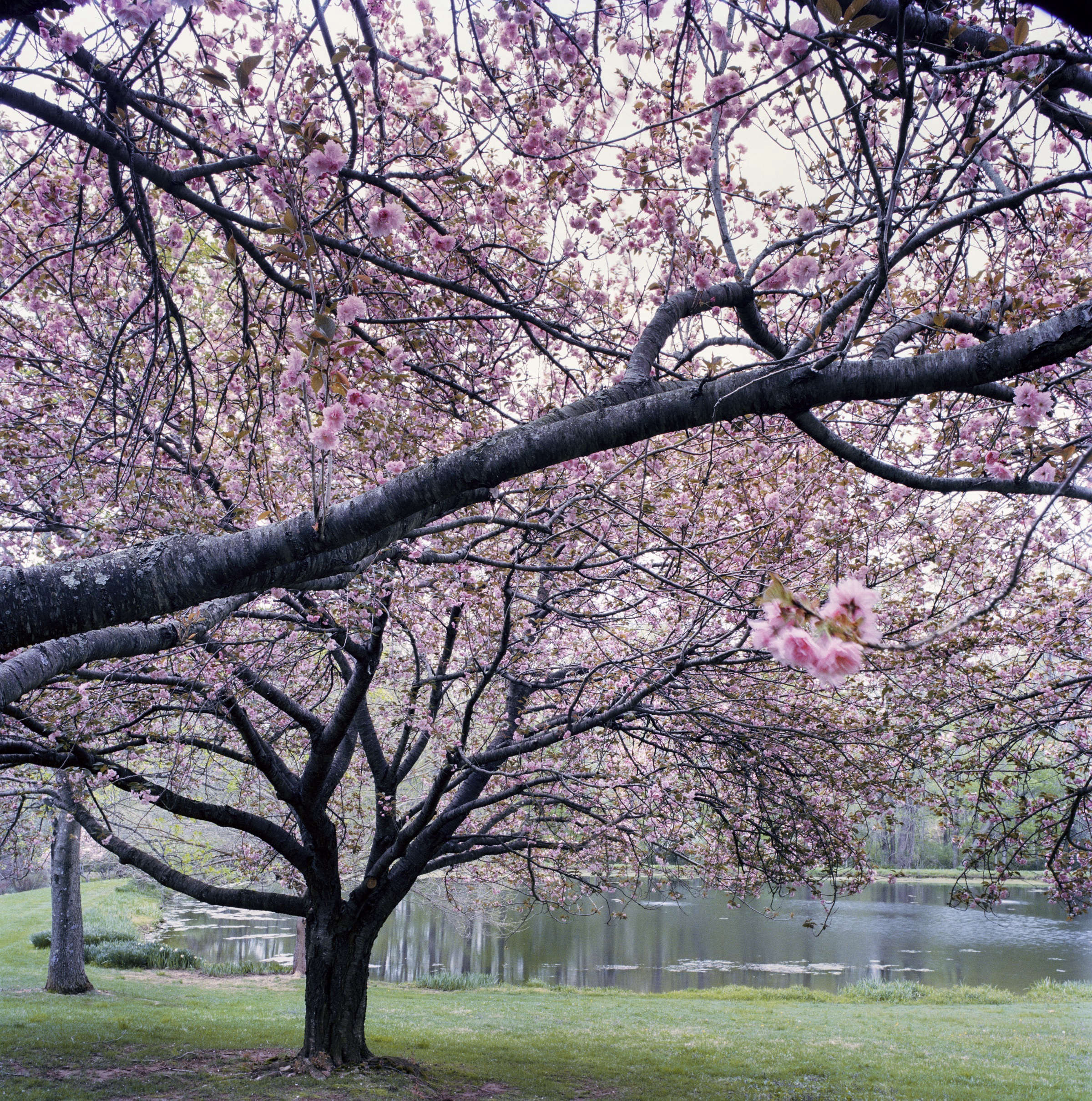 Everything You Need To Know About Flowering Trees Gardenista