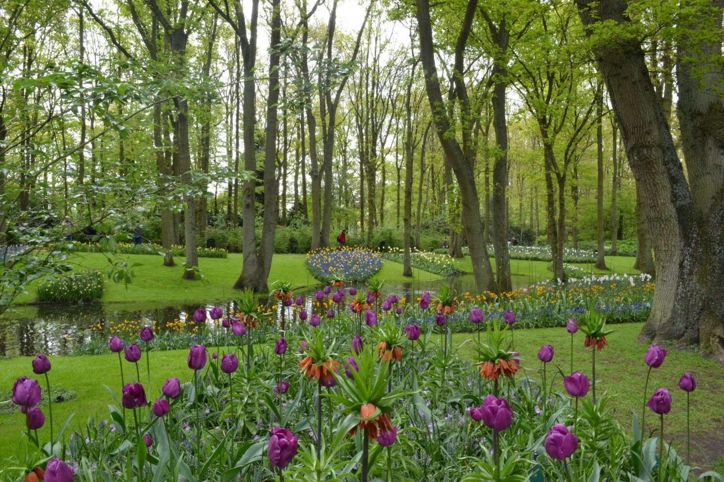 在荷兰的花园里,荷兰花园,还有,维也纳的芭蕾浴和芭蕾舞,通常应该在一起。来自来自来自荷兰的荷兰花园,从荷兰的花园里提取的。