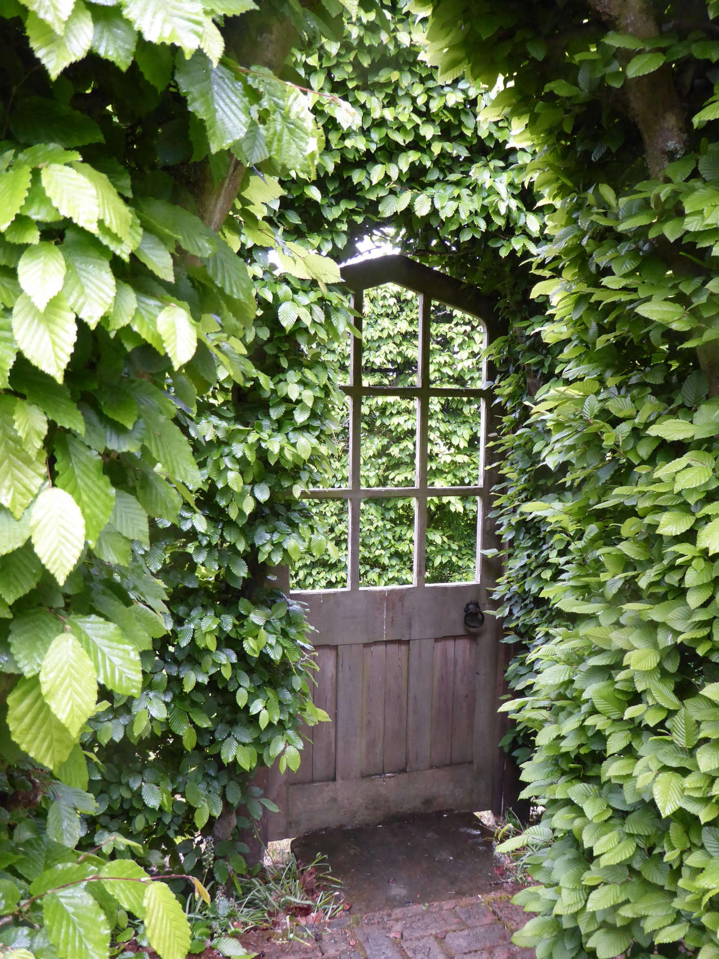 A wooden door in the hornbeam hedge leads to a secluded miniature green garden.
