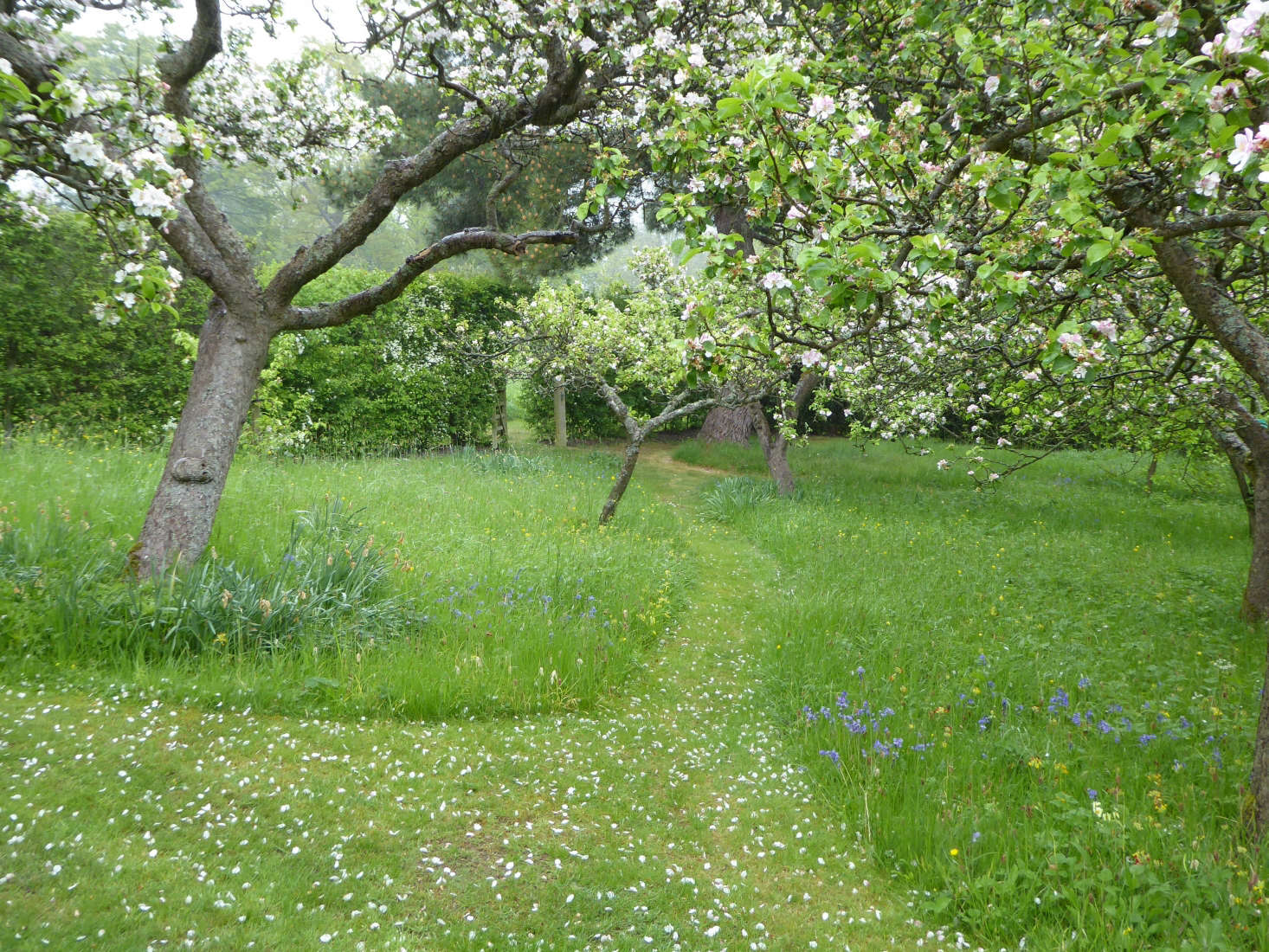 A mown path guides you into the orchard.