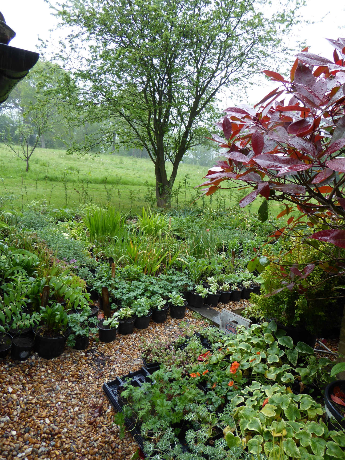 """The garden's enviable and newly installed """"nursery"""" area of stock plants."""