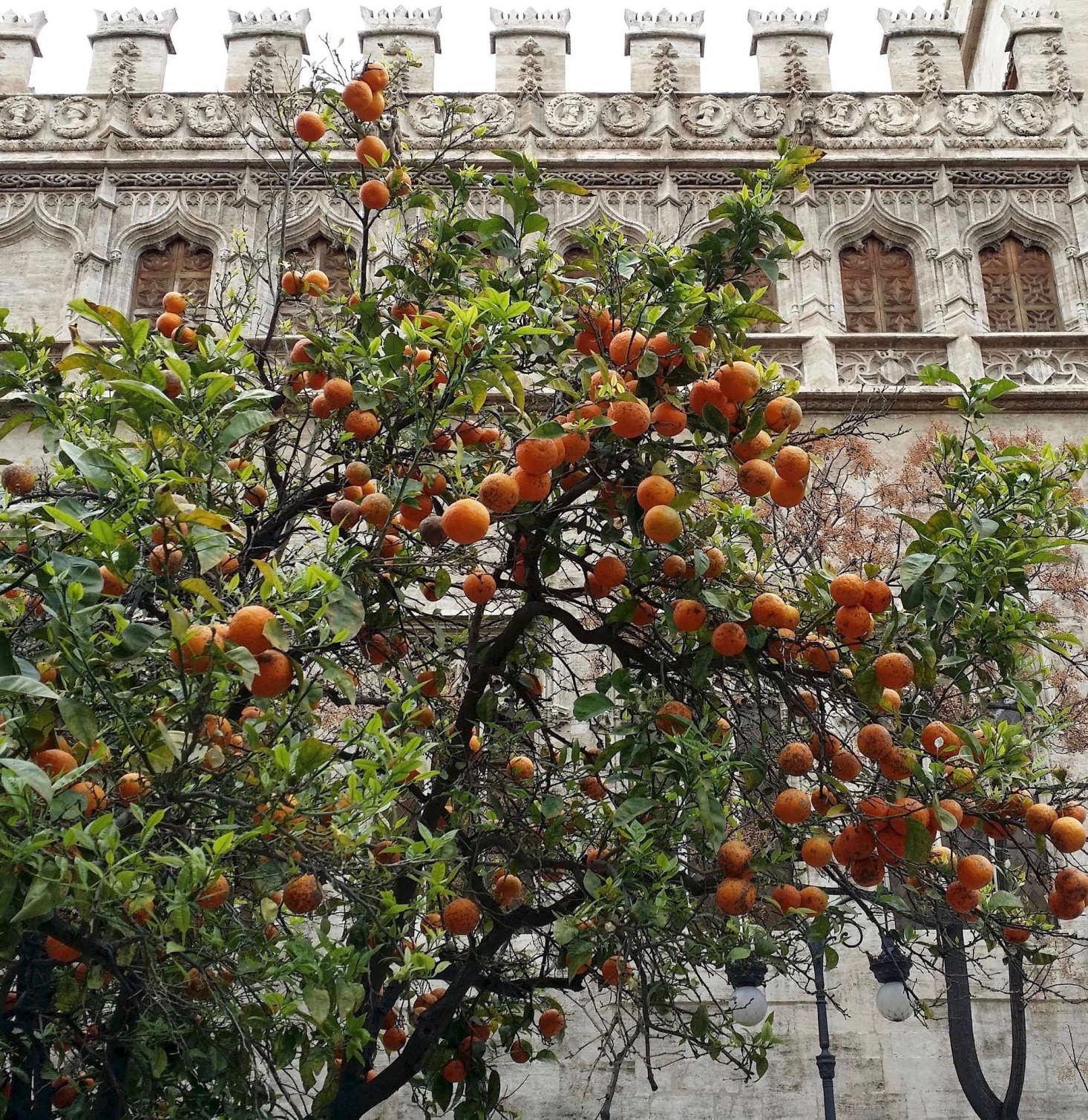 温暖的温暖温暖的地中海环境温暖。在印度,印度,亚马逊的水果,但不会买水果蛋糕!更好的种植种植更多的土壤。布莱恩·亚历山大·亚历山大的照片。