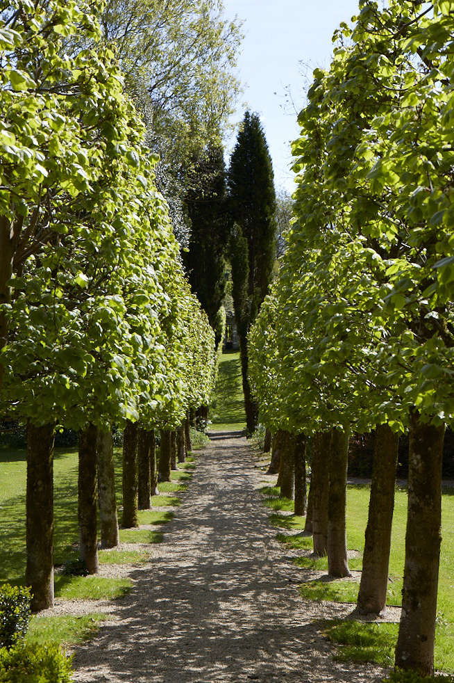 Pleached lime tree allee at Wortley House by Britt Willoughby Dyer