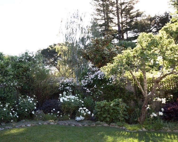 玫瑰花园的车库。五年后,我