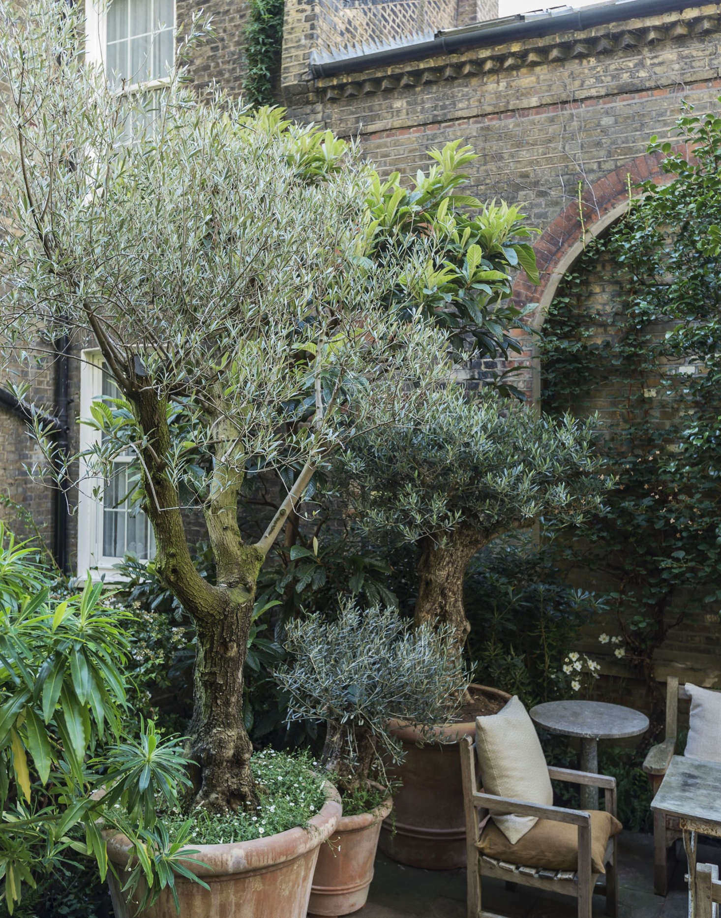 Against the brick wall, Tom planted camellias, southern magnolia, and evergreen loquat (Eriobotrya) trees, to give solid texture and enclose the space with greenery.