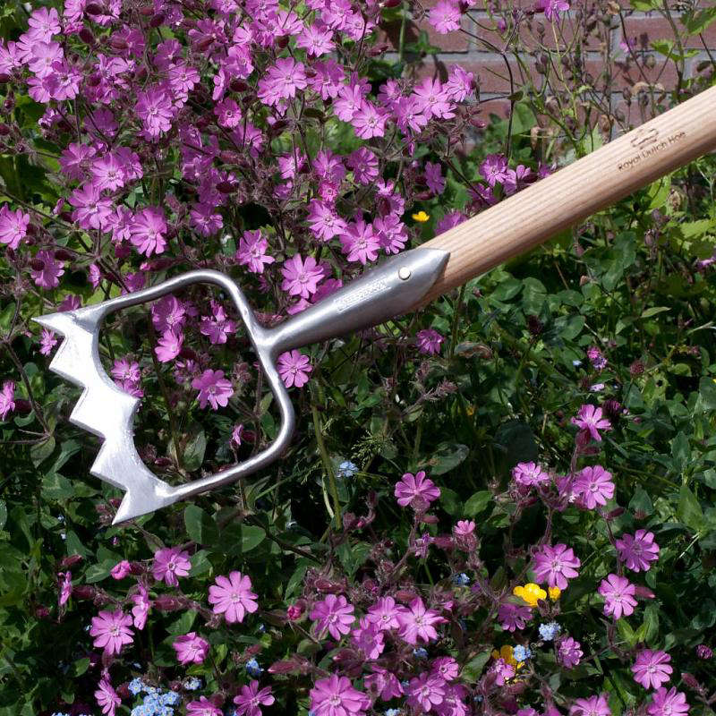 10 garden ideas to steal from the netherlands gardenista for Royal dutch gardens