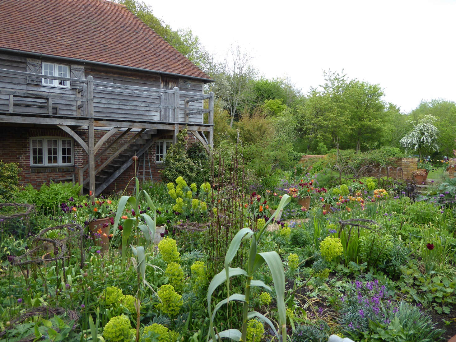 Euphorbia And Spring Bulbs In Bloom In The Oast Garden At Perch Hill, Sarah  Ravenu0027s