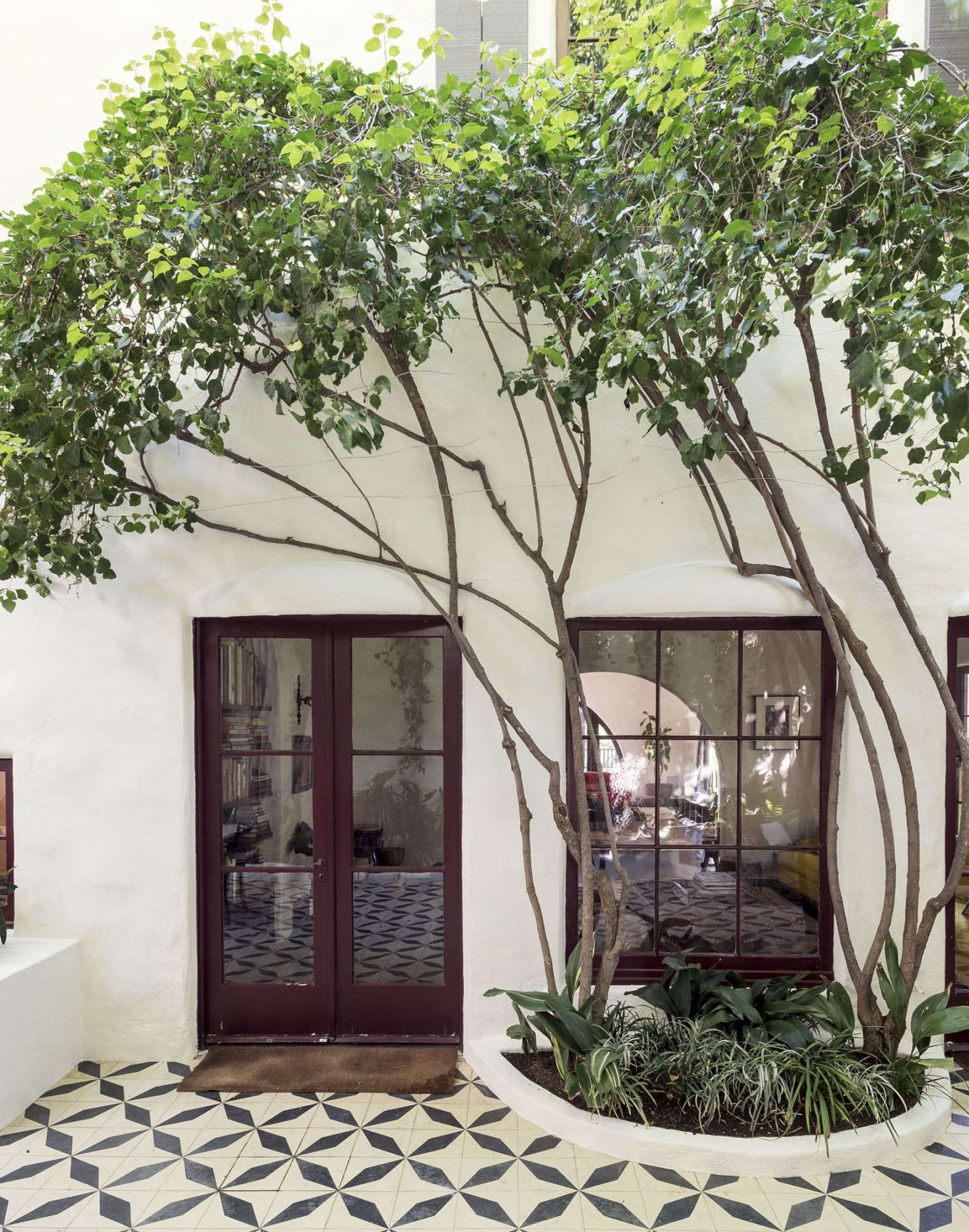"Garden designer had mature ficus trees ""limbed up"" to create graceful silhouettes in a tiled courtyard garden in Los Angeles."