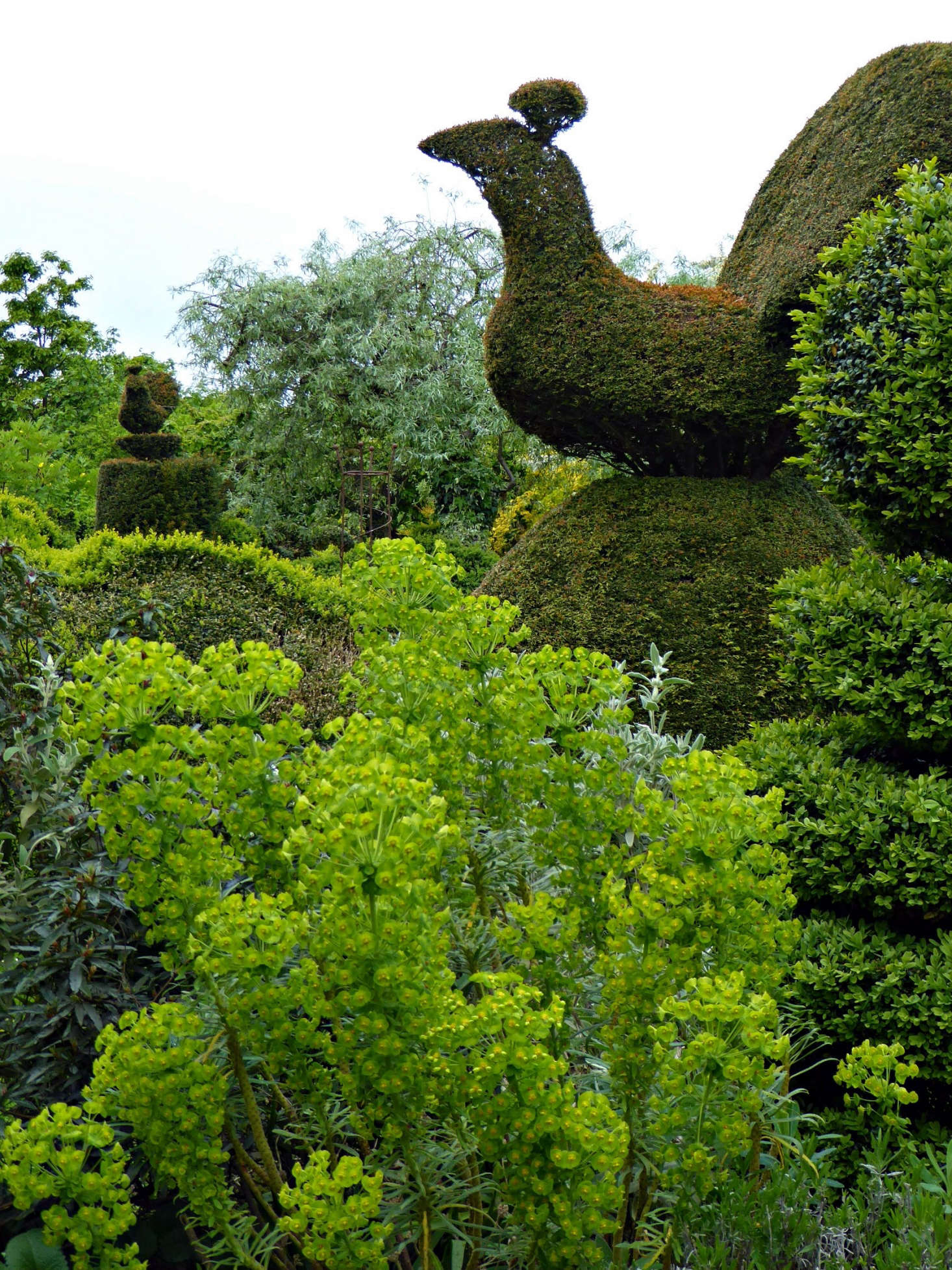 The Zingy Lime Color Of Euphorbia Also Makes A Great Foil For The Deep  Green Yew