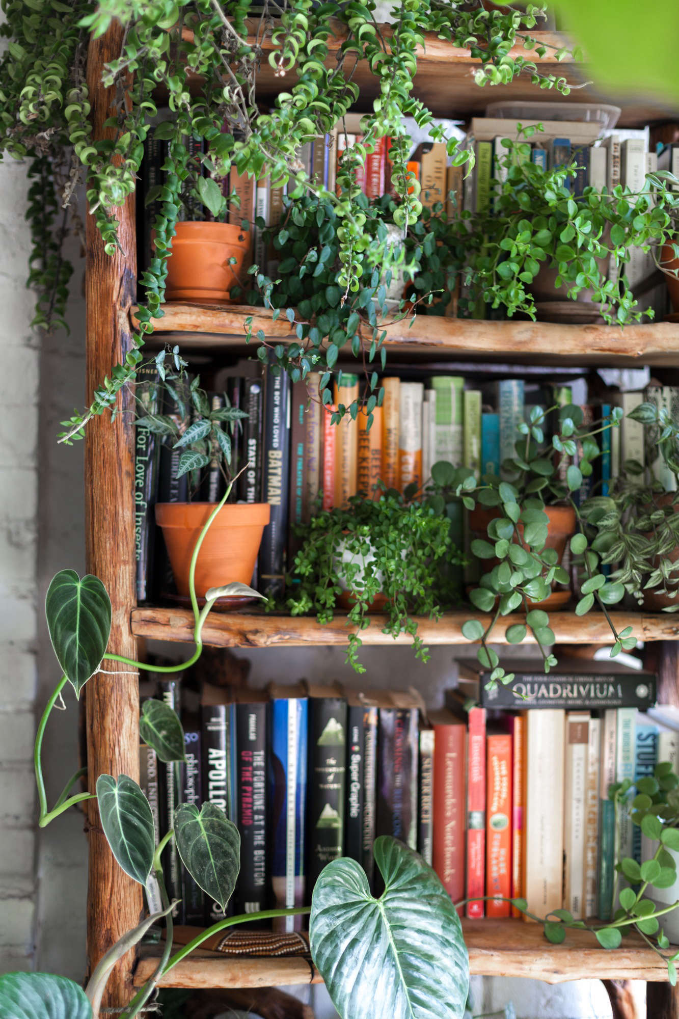 Living With 670 Plants In A Brooklyn Apartment