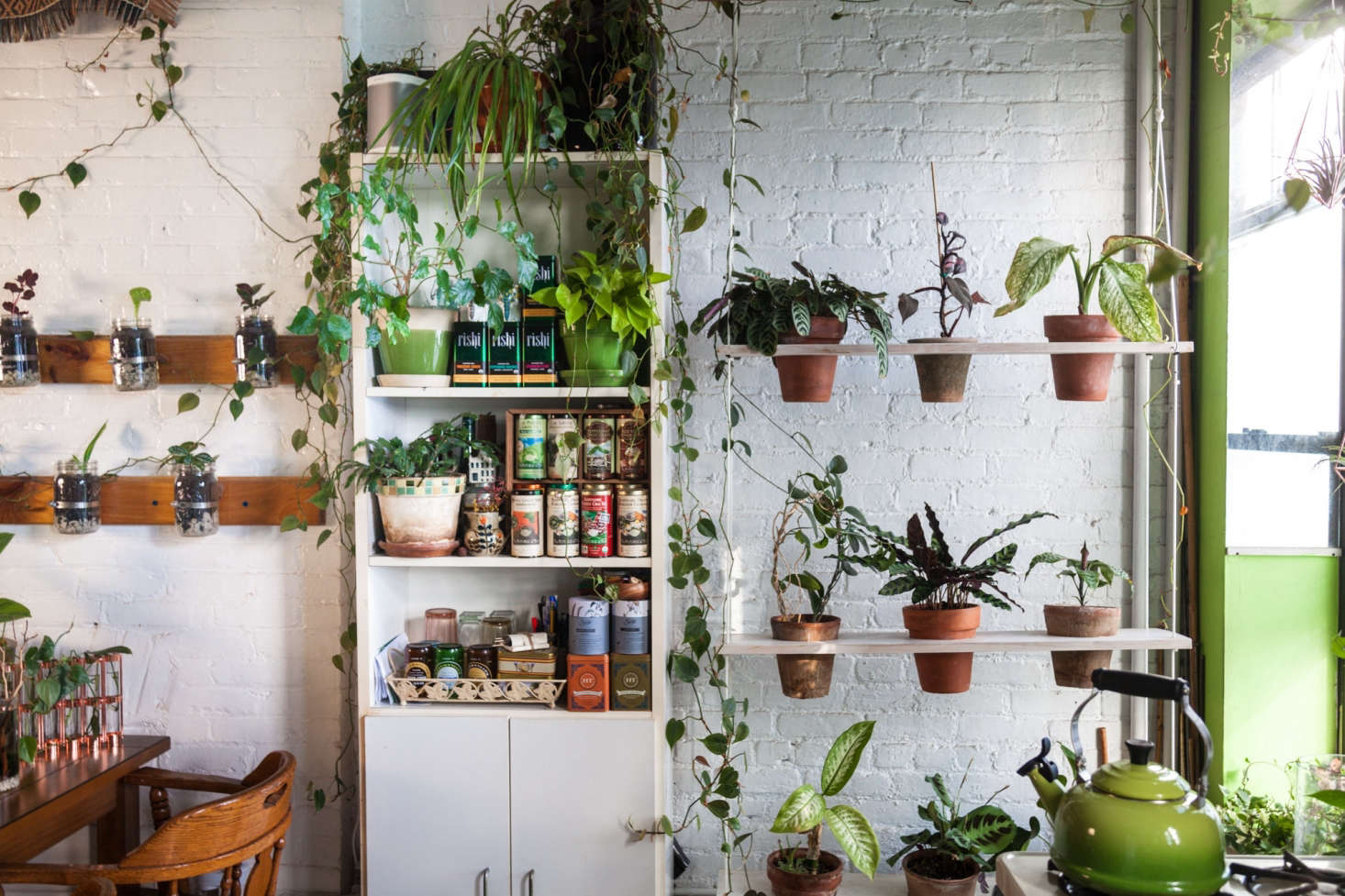 Photograph courtesy of@homesteadbrooklyn, fromLiving with Houseplants: Four Years Later in a Brooklyn Apartment.