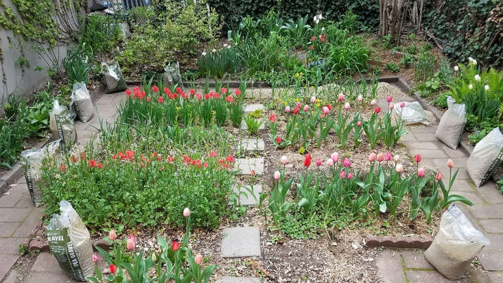 My Brooklyn Garden path makeover by Marie Viljoen