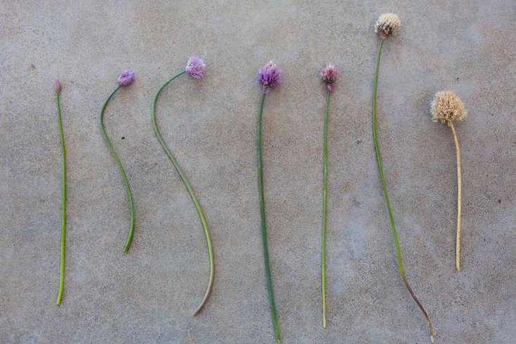 Healdsburg California garden Arterra Landscape by Mimi Giboin