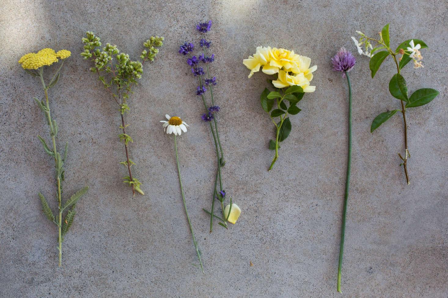 从左,阿松,玫瑰,玫瑰,薰衣草,薰衣草,莉莉。