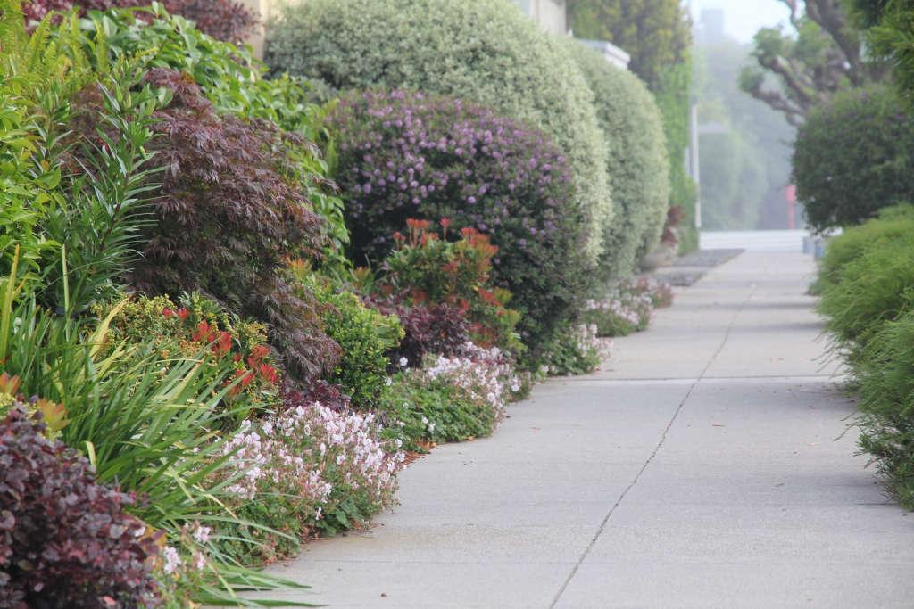 Lush Sidewalk