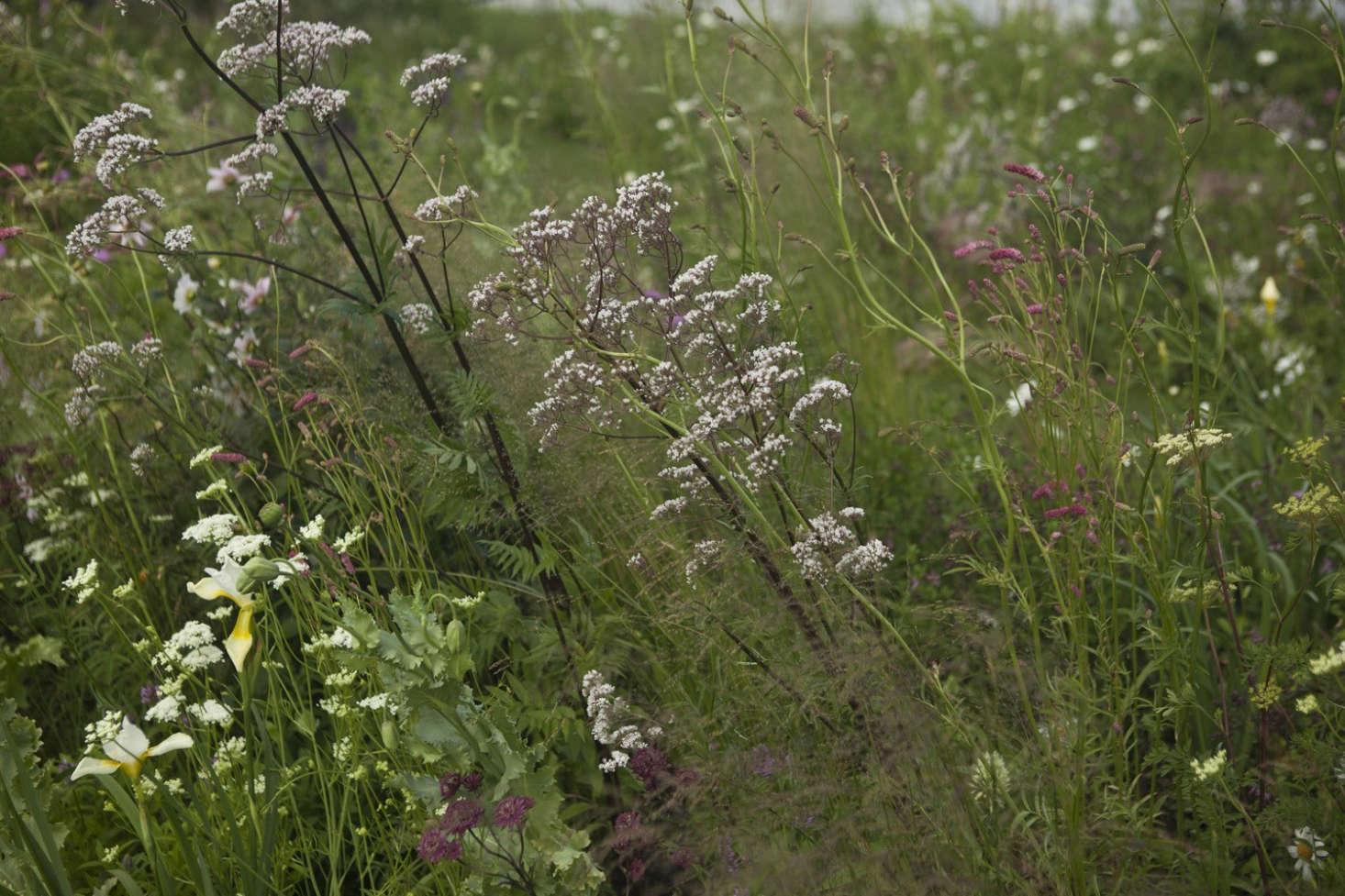 Landscape Ideas: Jo Thompson\'s Very English Garden - Gardenista