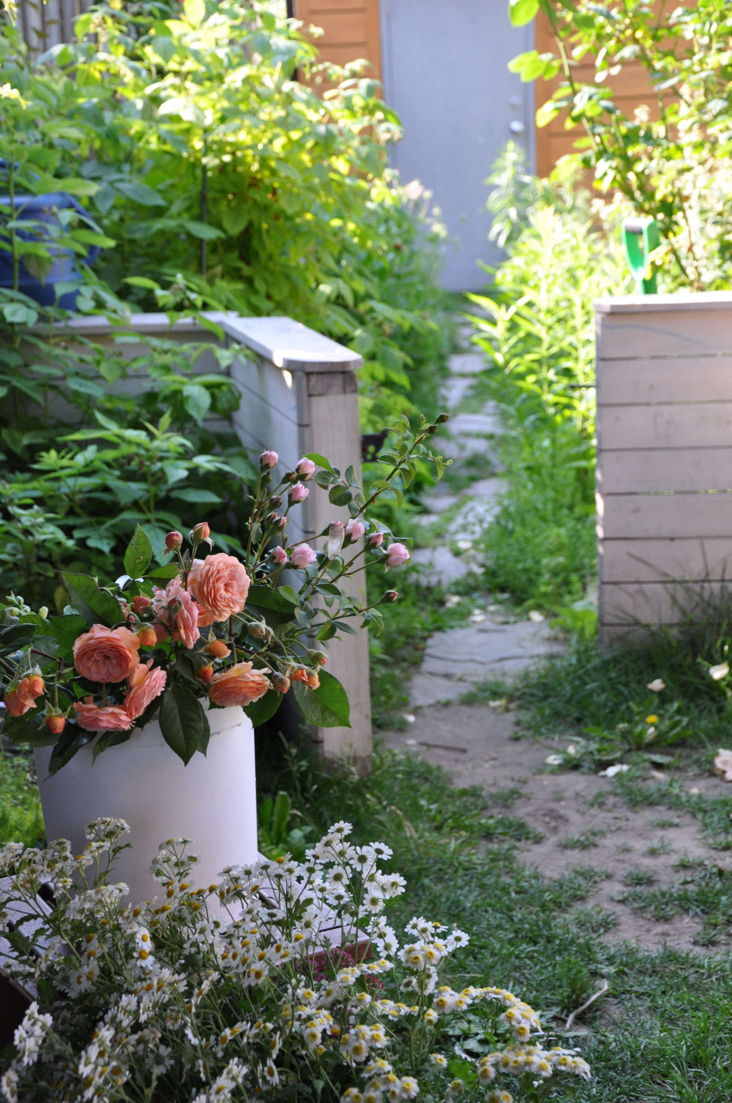 Sarah Nixonu0027s Business, My Luscious Backyard, Relies On Urban Gardens In  The Neighborhood To