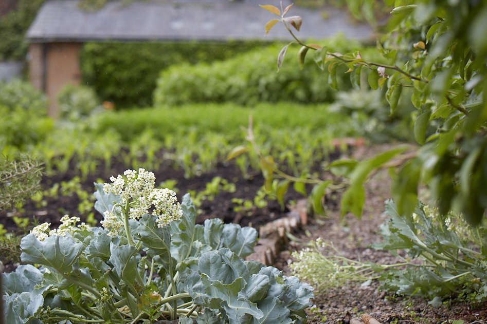 """Pawson has repurposed the old Victorian vine house as a warm space for cucumbers, aubergines, and peppers and taken over the lower garden for polytunnels. """"It's wonderful to see the walled garden gone back to 100percent vegetables and soft fruit,"""" says Helen. """"Which is exactly how I had taken it over—it's gone full circle."""""""