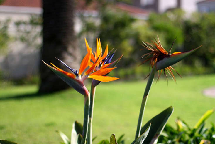 bird of paradise by warrenski via flickr