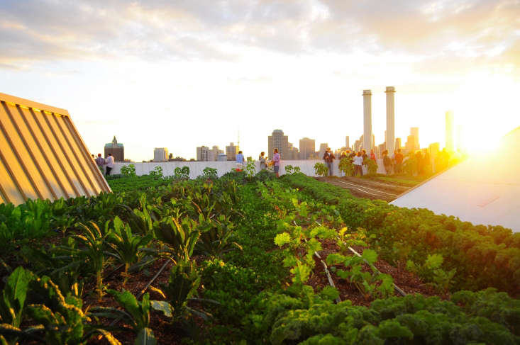 Sunset at the Brooklyn Grange Navy Yard rooftop farm