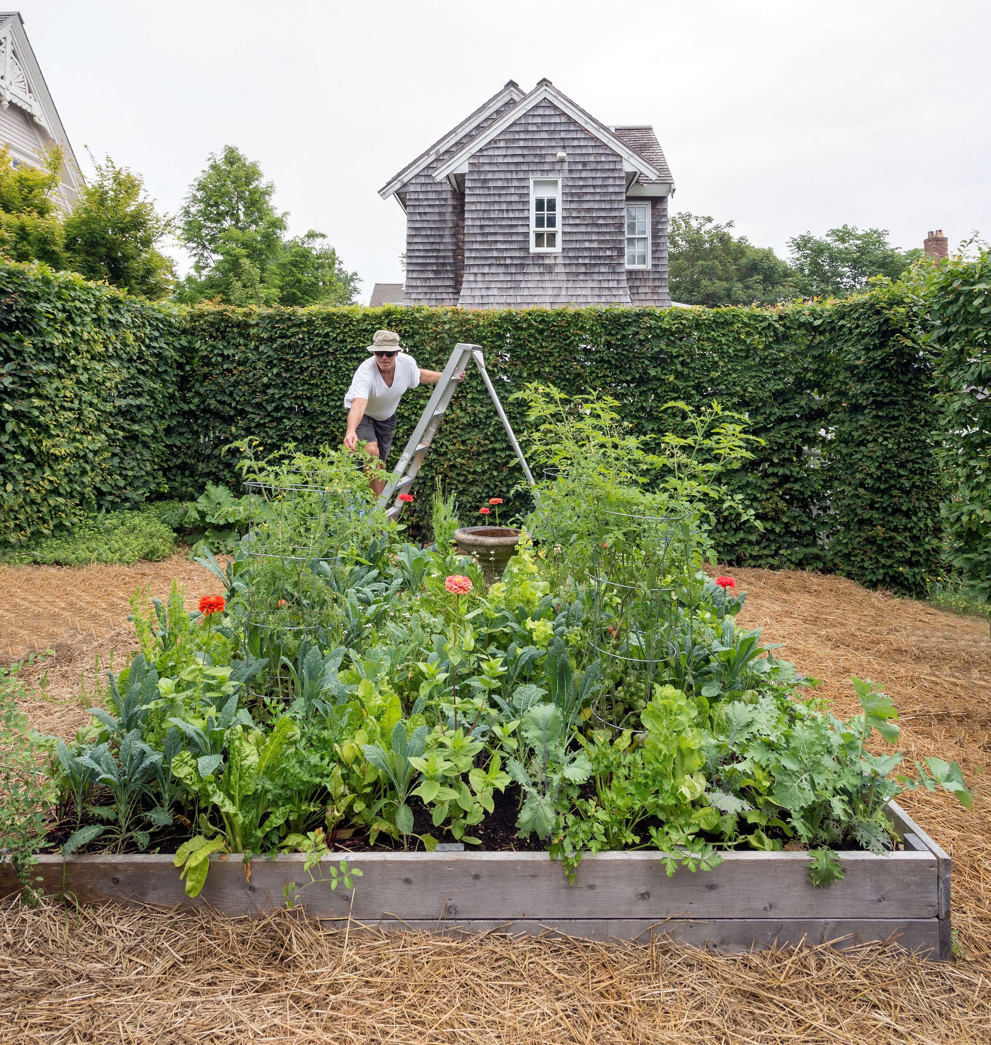 Everything You Need To Know About Edible Gardens