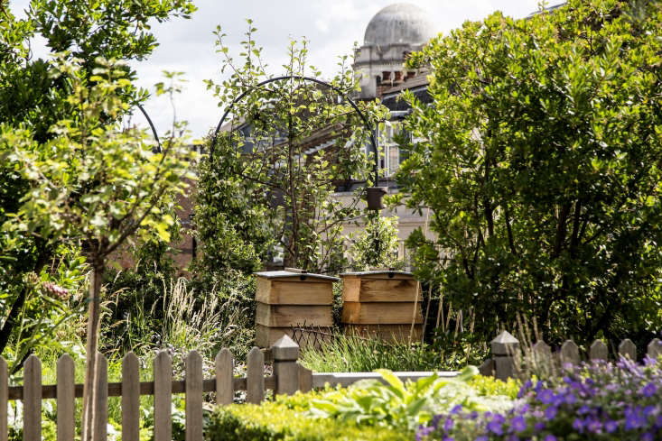 Ham Yard Hotel London roof garden beehives