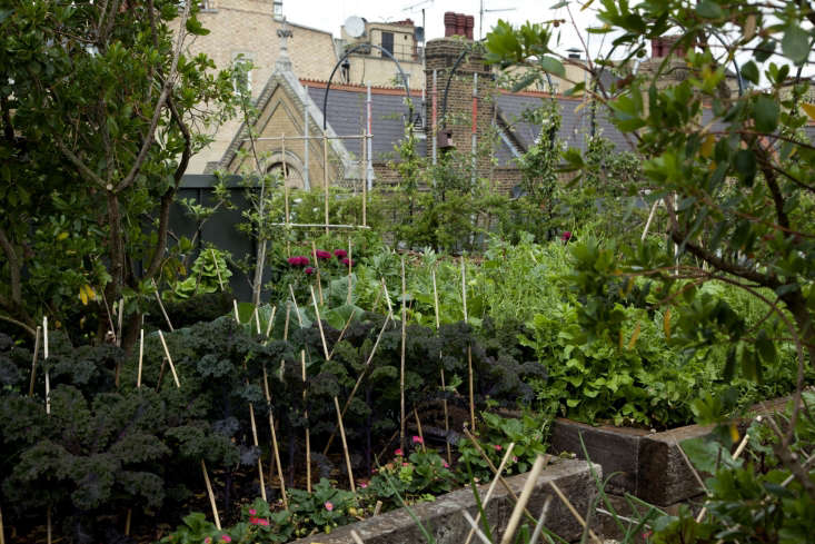Ham Yard Hotel London roof garden raised beds edibles