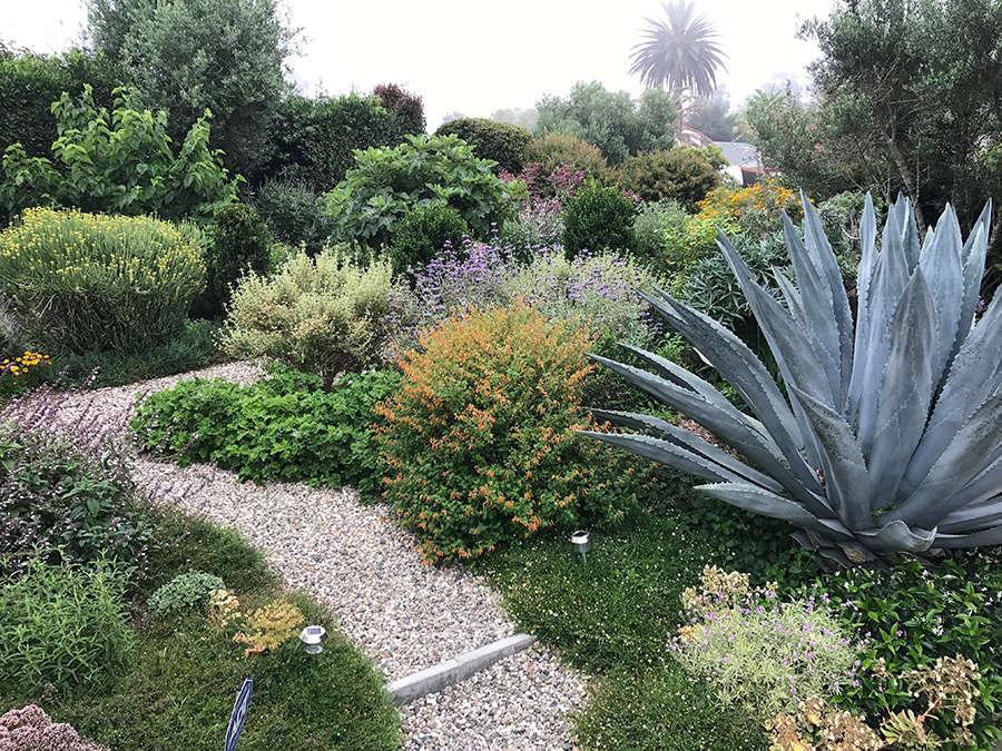 Justin Carrollu0027s Low Water Santa Barbara Garden Was Chosen By Deborah  Needleman, Who Commented On