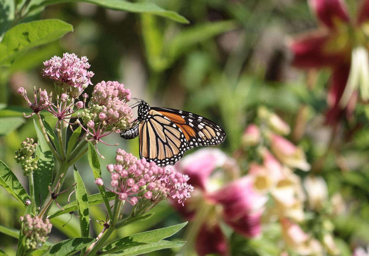 """一个蝴蝶种鸟的幼虫。来自《维纳娜》的《Viadiadiadiadiadiadiads》,《""""""""""""""""""""来自《Wiadiadiiiadiadiadiadium》的照片"""":""""从何来?选马普斯特。"""