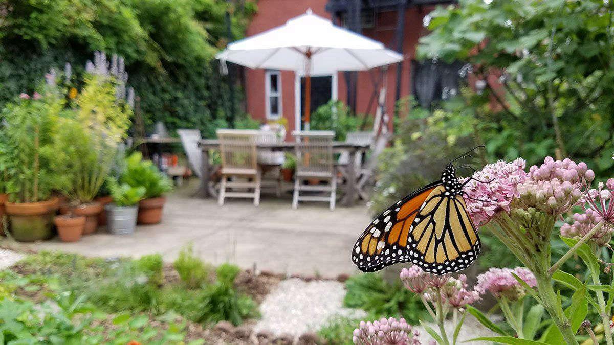 Monarch in Marie Viljoen's garden by Marie Viljoen