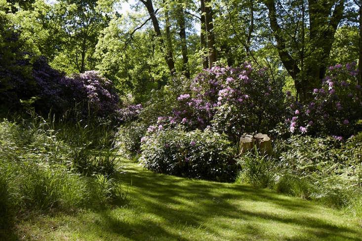 shade garden idea rhododendrons bowood Britt Willoughby Dyer