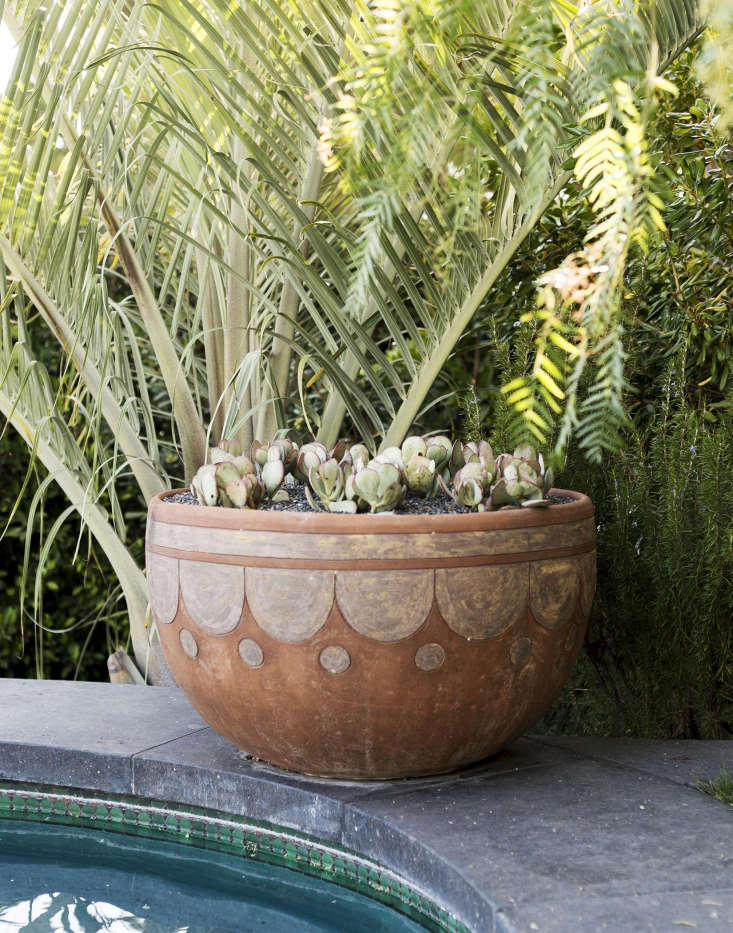swimming pool landscape plants terra cotta planter los angeles by matthew williams