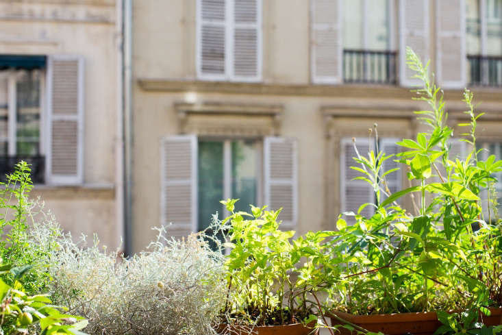 Paris balcony garden ideas railing planters by Mimi Giboin