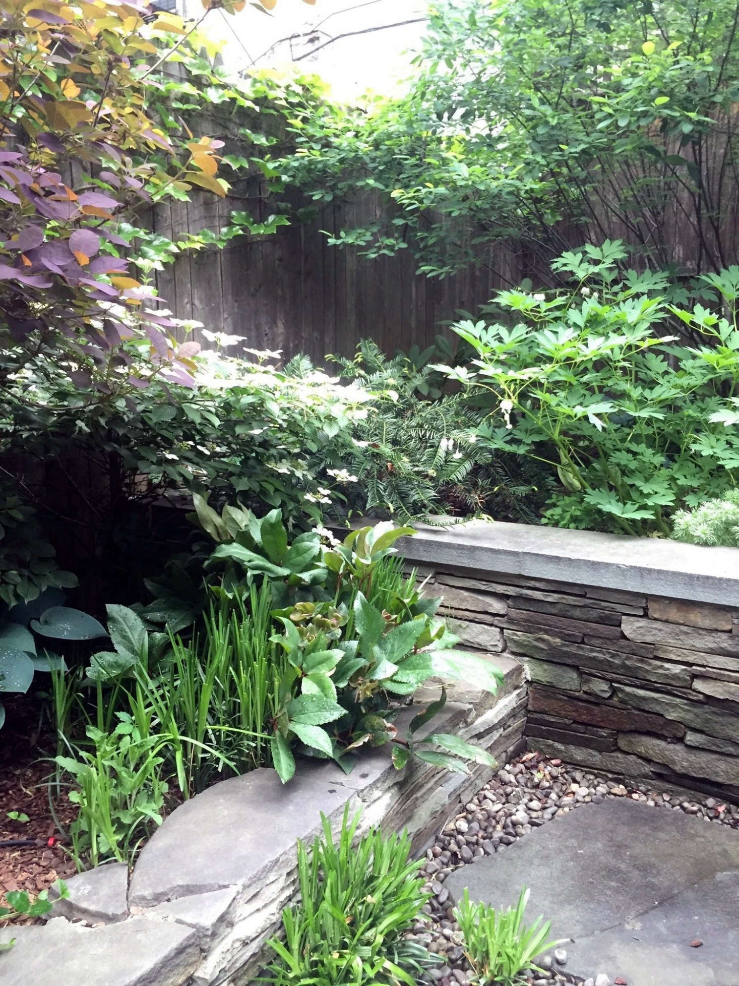 Hostas And Hellebores, Planted In Clumps In A Shady New York City Backyard  Designed By